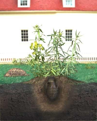 Garden ka dhexdiisa God weyn oga qod